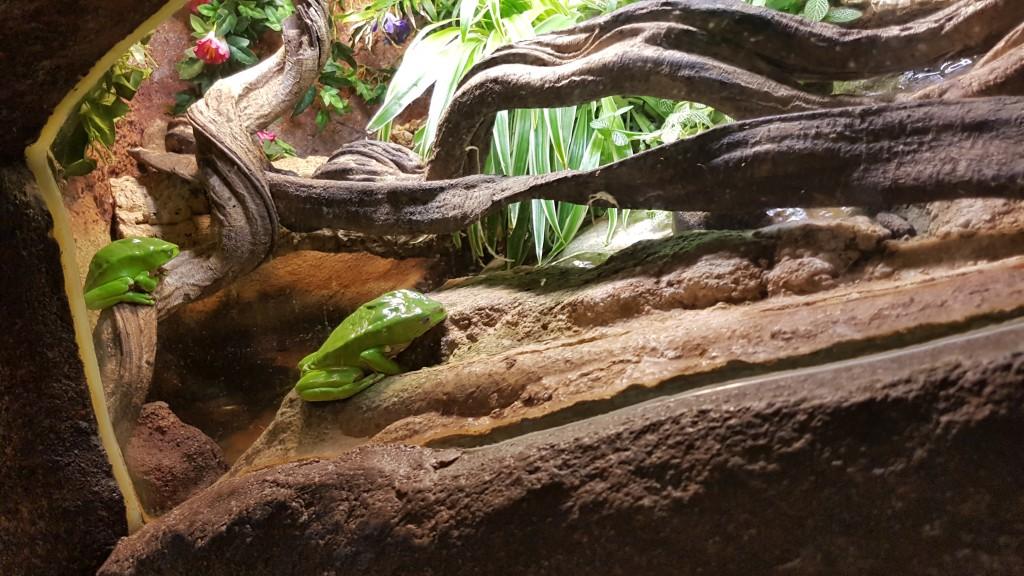 Serpentariium Blankenberge